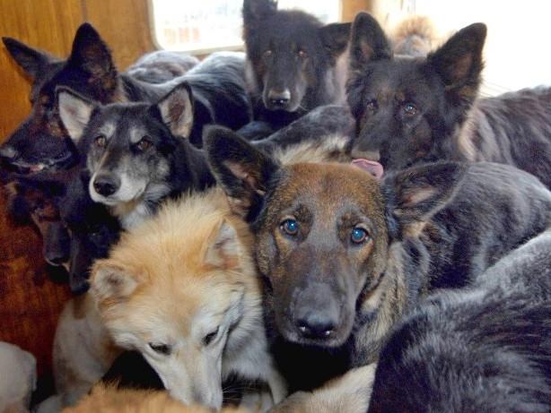 Messiewohnungen: Tiermessies: Wenn die Etagenwohnung zur Tierhölle wird