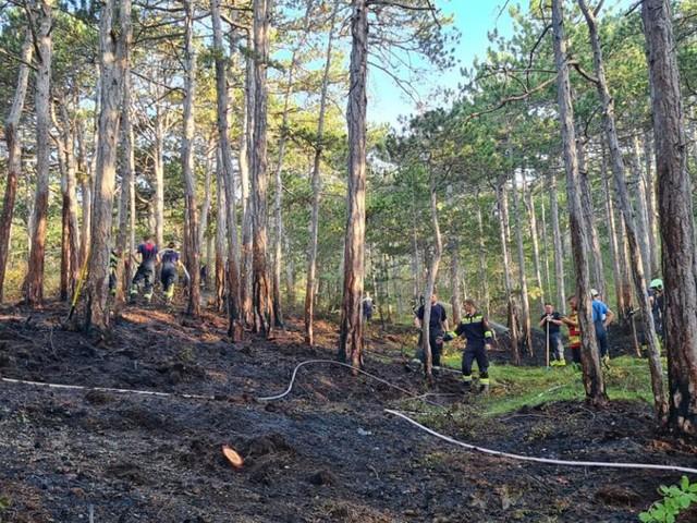 Waldbrand im Bezirk Baden: Mehrere Feuerwehren im Einsatz