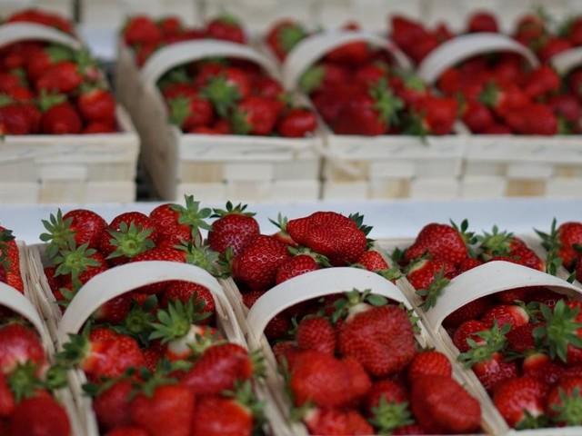 Die Ernte geht los: Erdbeerbauern sehen endlich rot