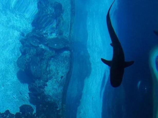 Tiere: Frauenpower im Haifischbecken im Tierpark Hagenbeck