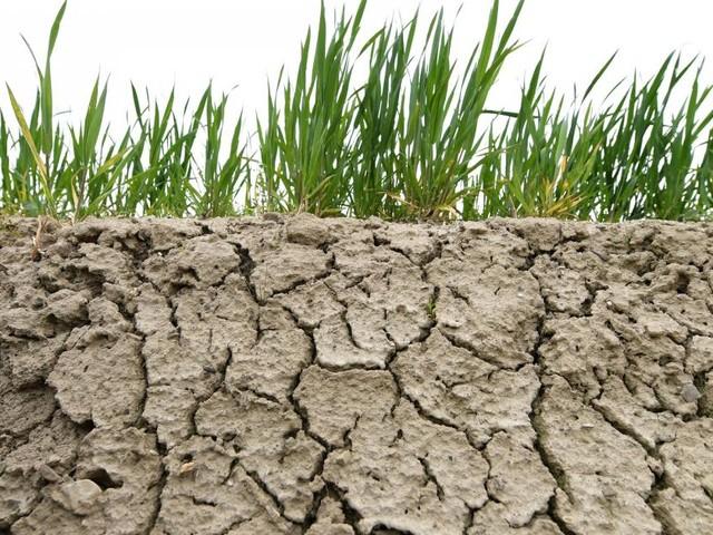 """UNO-Klimabericht als """"Totenglocke für fossile Brennstoffe"""""""