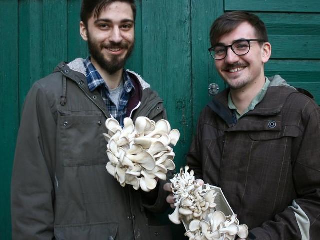 LandLeben: Der Pilz, der aus dem Schlosskeller kam