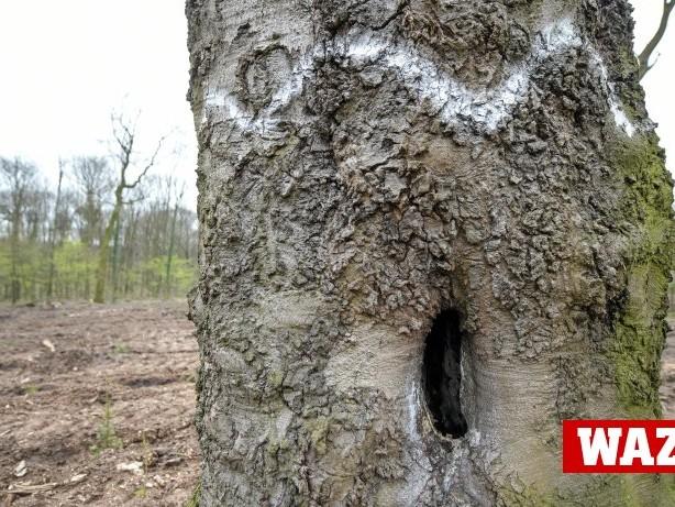 Wald und Umweltschutz: Das Ringen um die Zukunft des Baerler Buschs