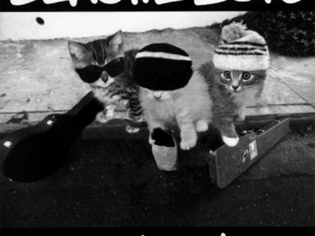 """The Kitten Covers"" – Album-Cover von Rap-Classics mit Kätzchen nachgestellt"