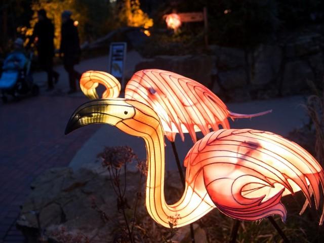 Nach Besucherrekord bei Halloween-Festival: Zoo Osnabrück beendet Lichterfest 2018 mit Laternenwoche