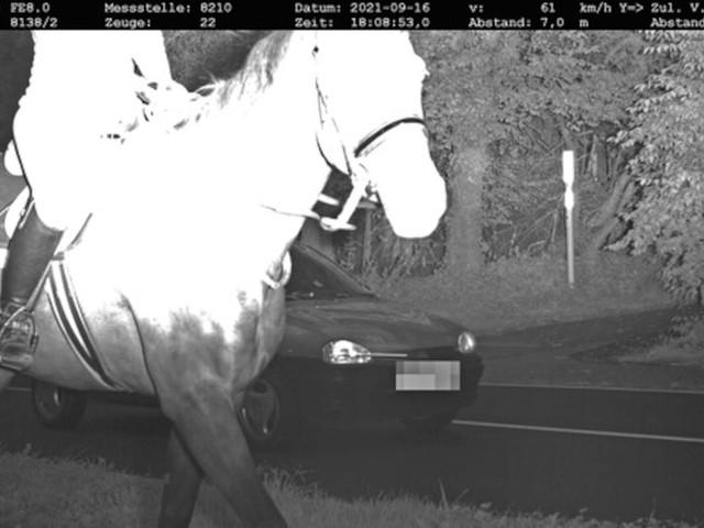 Kurioses Foto - Pferd läuft vor Blitzer-Messgerät und bewahrt Autofahrer vor Bußgeld