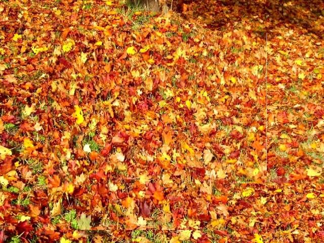 Herbst: Dämmerung, Laub und Wildwechsel