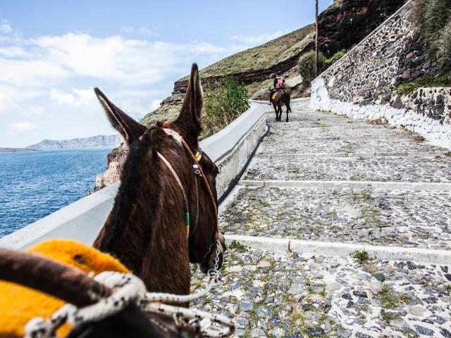 Griechenland: Schwere Touristen dürfen keine Esel mehr reiten