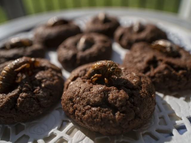 Cookie-Banner falsch eingesetzt: Verbraucherschützer mahnen knapp 100 Unternehmen ab