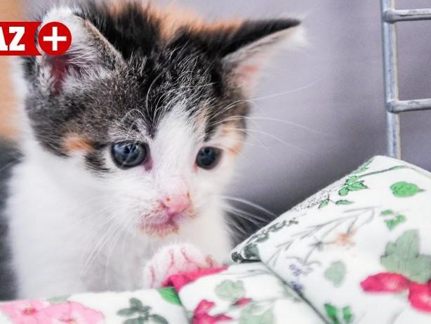 Tiere: Viele Streunerkatzen und Kitten im Tierheim Bochum-Hattingen