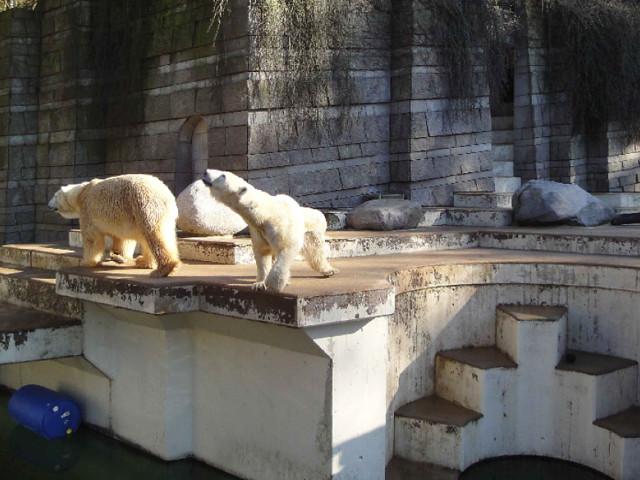 """""""ZOOM Erlebniswelt"""" in Gelsenkirchen - PETA übt scharfe Kritik: Geburt von Eisbärbaby ist kein Grund zum Feiern"""
