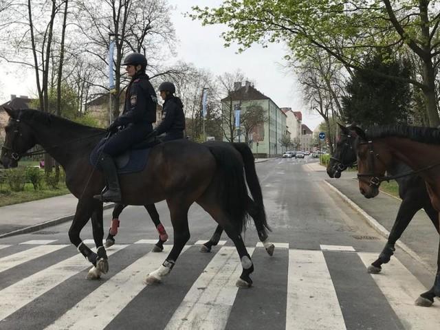 Nach Kickls Abgang: Ungewissheit für die berittene Polizei
