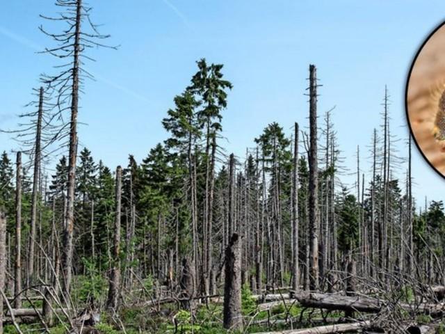 """Waldsterben in Niedersachsen: """"Wir sind fassungslos"""""""