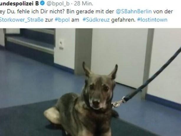 Bahnhof Südkreuz: Hund fährt in Berlin alleine S-Bahn