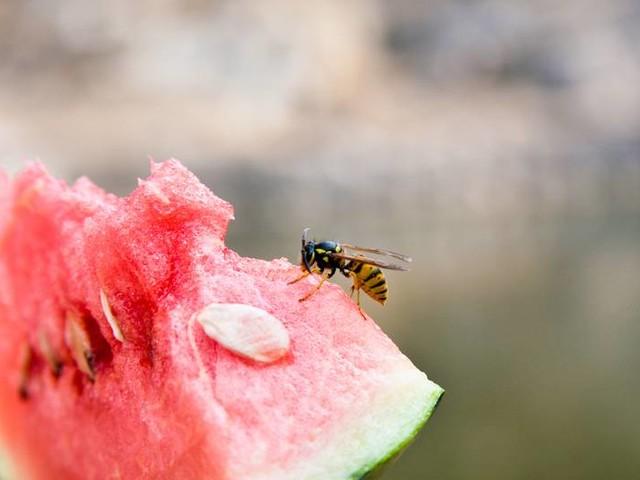 Lass dich nicht stechen!: So gehst du richtig mit Wespen um