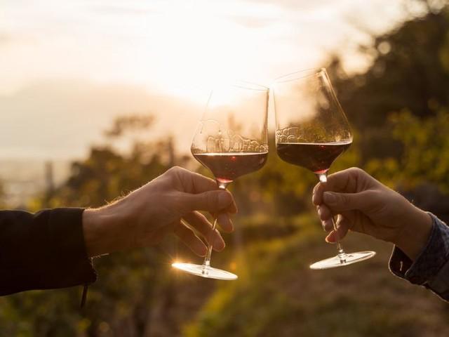 Wein erleben: Die 10 spannendsten Weinerlebnisse in Österreich