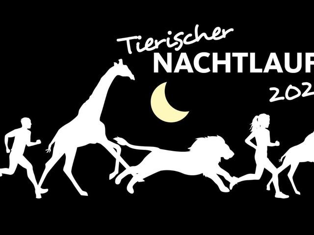 Nachtlauf 2020 im Erlebnis-Zoo Hannover: Alle Infos zum Event!