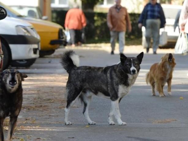 Tierschutz: Streunende Hunde im Urlaub nicht anfassen oder füttern
