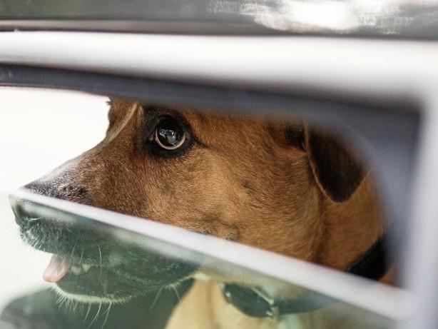 Hitze: Herrchen ging baden - Hund blieb in überhitztem Campingbus