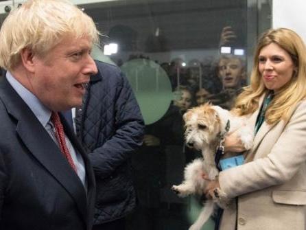 """""""Wirbeltiere haben Gefühle"""": Großbritannien will Vorreiter für Tierrechte werden"""
