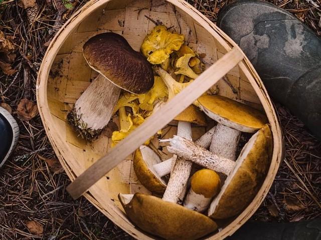 Pilzkunde: Sind Sie ein Schwammerl oder ein Champi(gn)on?