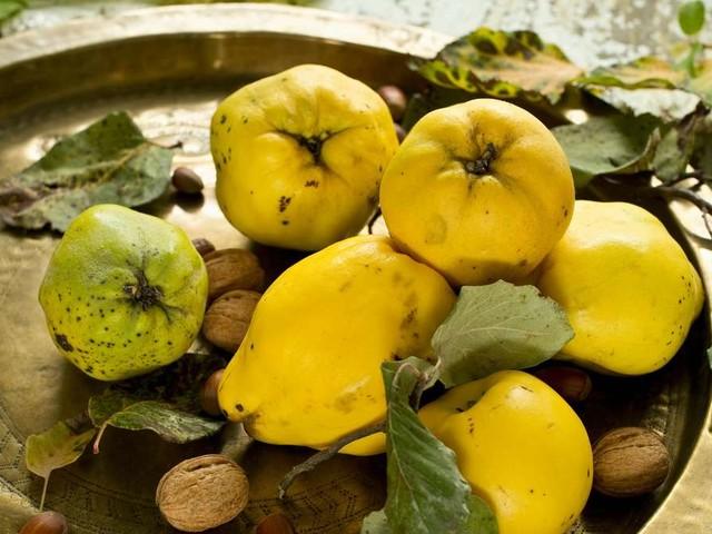 Quitten: So gesund sind die gelben Früchte aus dem Garten
