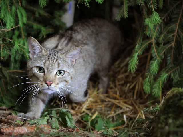 Das Werk eines Tierhassers?Toter Kater und kranke Katze in Wald gefunden!