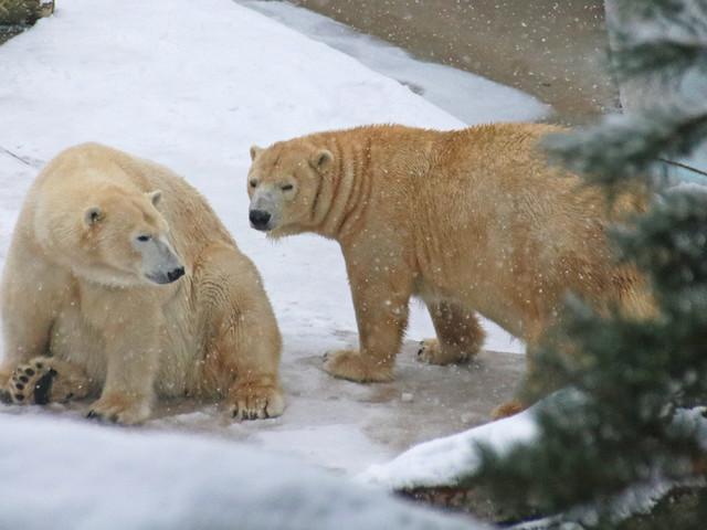 """Zoo Karlsruhe veranstaltet Workshop für Kinder: """"Tiere im Winter"""" am 2. und 3. November 2017"""