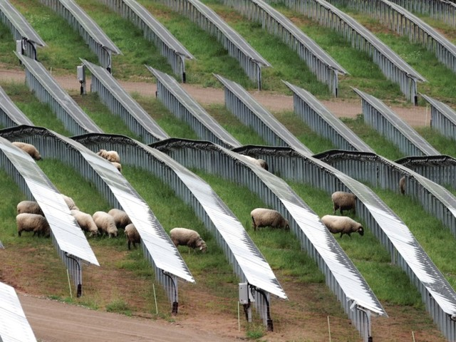 Landwirtschaft: EU-Parlament segnet zentrale Punkte der Agrarreform ab