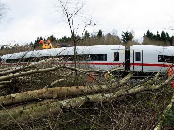 Verband Pro Bahn will weniger Bäume nebenGleisen