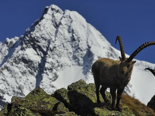 """Nationalpark-Direktor Rupitsch: """"Klimawandel trifft die Berge hart"""""""