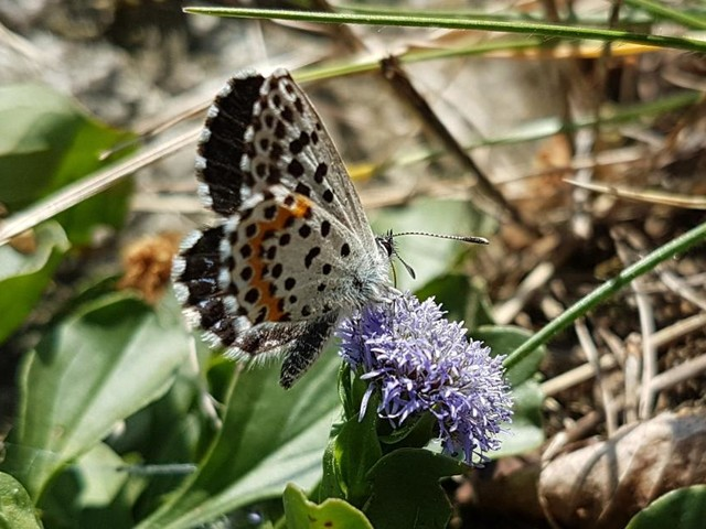 City Nature Challenge: Tiere und Pflanzen in der Wachau dokumentieren