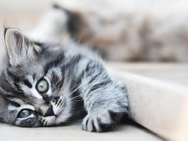 Allergisch gegen Haustiere - Katzenallergie: Symptome, Allergietest und Behandlung - was Sie wissen sollten