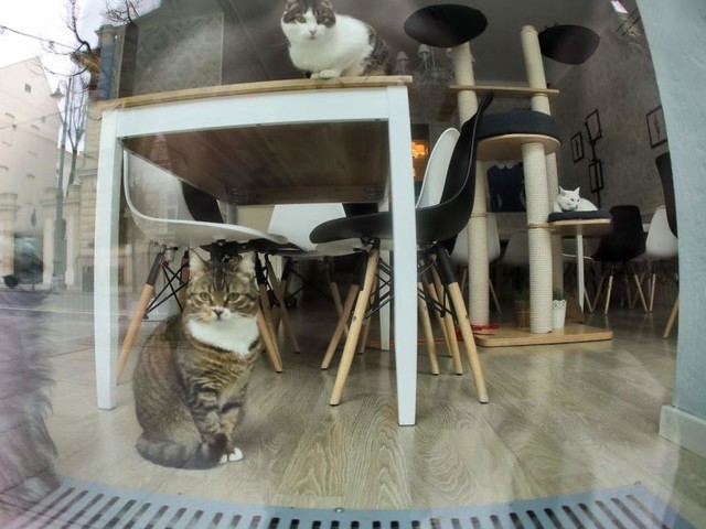 Neues Katzenlokal: Vegan essen in tierischer Gesellschaft