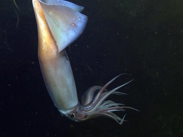 Wie Kalmare im Dunkeln kommunizieren