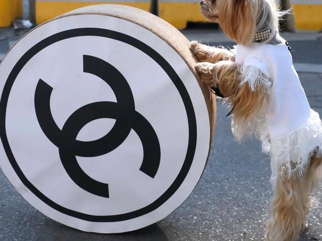 Logos zu ähnlich? Chanel verliert Rechtsstreit gegen Huawei