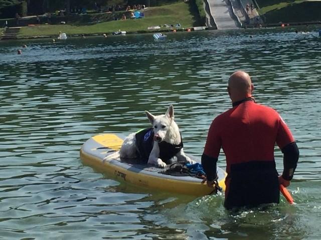 Neufelder See: Wasserrettung durch den Hund