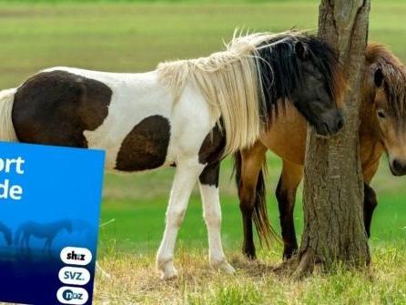 Vergewaltigte Pferde, Sadismus und die große Frage nach dem Warum