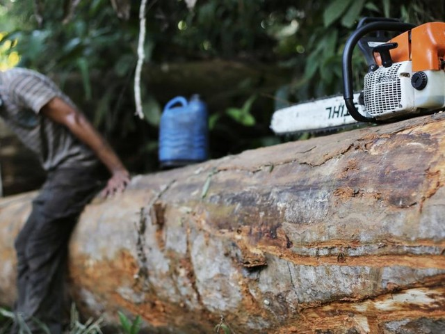 """Profitgier vor Klimaschutz am Amazonas: """"Da geht man über Leichen"""""""
