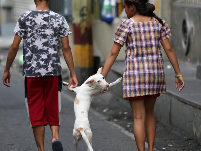 Von Hundewelpen gekratzt: Touristin stirbt an Tollwut