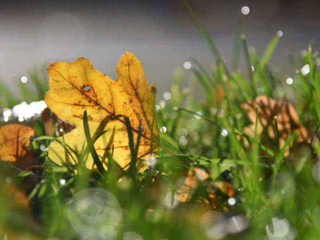 Warum Sie jetzt im Herbst noch einmal Rasen säen sollten