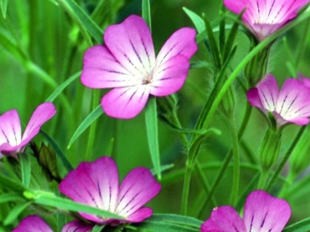 Artensterben: Fast jede dritte Wildpflanze in Deutschland vom Aussterben bedroht