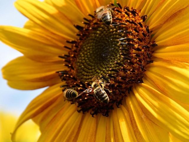 """Nach """"Rettet die Bienen"""": Verein fordert Volksentscheide im Bund"""