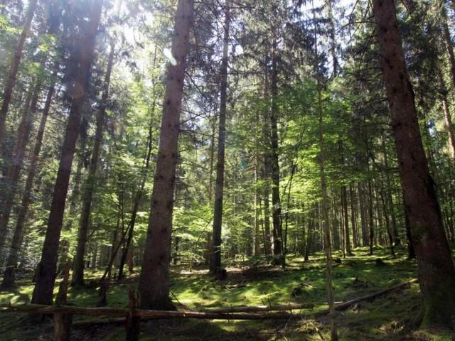 Rheinland-Pfalz: Was es im Nationalpark Hunsrück-Hochwald zu entdecken gibt