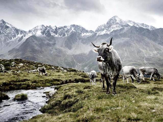 Muss man Angst in den Alpen haben?
