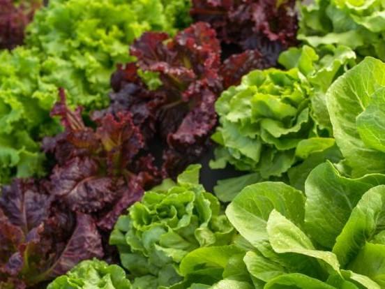 Produktrückruf im Oktober 2020 aktuell: Mit Bakterien verseucht! Edeka und Marktkauf rufen Salat zurück