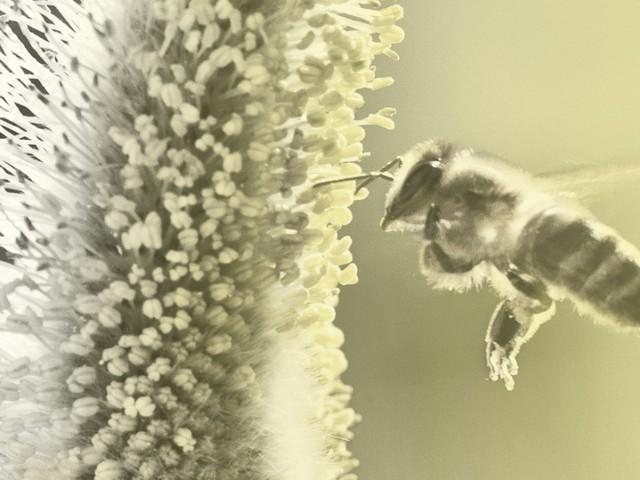"""Bienensterben: """"Das Volksbegehren soll viel mehr als nur die Bienen retten"""""""