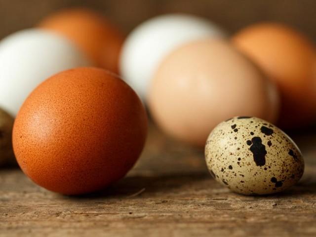 Wie Vögel ihre Eier färben