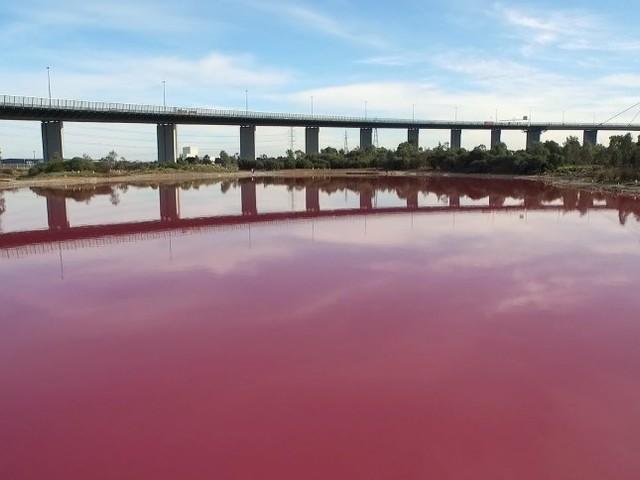 See in Melbourne verfärbt sich: Pink ist das neue Blau
