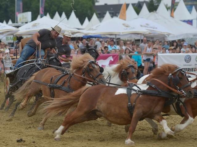 Pferdesport-Festival in Neuss: Equitana Open Air kann im Juli stattfinden